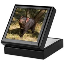 Tasmanian Devil Keepsake Box