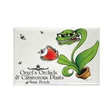 Orgel's Orchids Rectangle Magnet (10 pack)