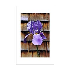 Iris and Shingles Posters
