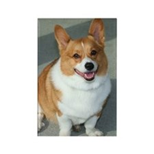 Welsh Corgi Rectangle Magnet