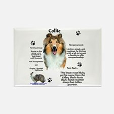 Collie 1 Rectangle Magnet