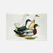 Duck Quartet Rectangle Magnet