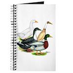 Duck Quartet Journal