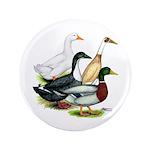"Duck Quartet 3.5"" Button (100 pack)"