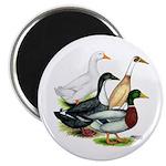 "Duck Quartet 2.25"" Magnet (10 pack)"
