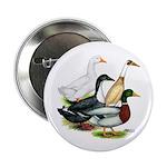 "Duck Quartet 2.25"" Button (100 pack)"