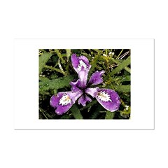 Pacific Coast Iris Posters