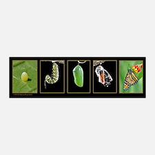 Monarch Metamorphosis 21x7 Wall Peel