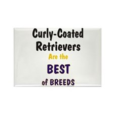 Curly-Coated Retriever Best Rectangle Magnet