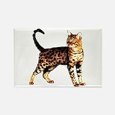 Bengal Cat: Raja Rectangle Magnet