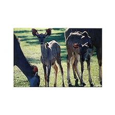 Greater Kudu Rectangle Magnet