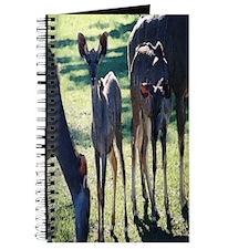 Greater Kudu Journal