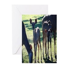 Greater Kudu Greeting Cards (Pk of 10)