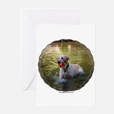 Lab 5 Greeting Cards (Pk of 10)