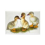 Buff Orpington Ducklings Rectangle Magnet (10 pack