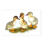 Buff Orpington Ducklings Postcards (Package of 8)