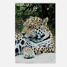Jaguar Portrait Postcards (Package of 8)