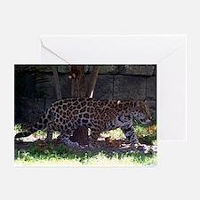 Jaguar Walking Greeting Cards (Pk of 10)