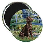 Bridge / Labrador (Choc) Magnet