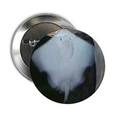 """ray 2.25"""" Button (100 pack)"""