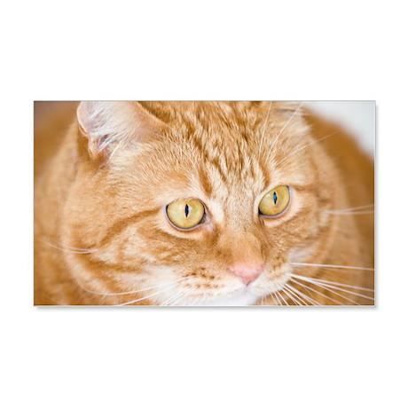 Orange Cat 22x14 Wall Peel