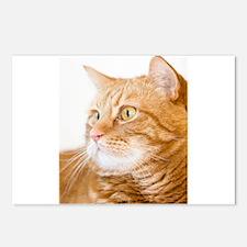 Orange Cat Postcards (Package of 8)
