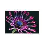Pink Daisy Rectangle Magnet