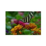 Floral Butterfly Rectangle Magnet
