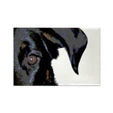 Beauceron Graphic Rectangle Magnet (10 pack)
