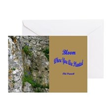Bloom Cards (Pk of 10)