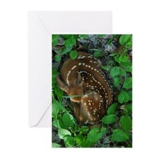 J. Grenell Photography Greeting Cards (Pk of 10)
