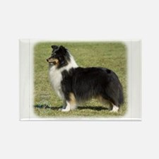Shetland Sheepdog 9J088D-06 Rectangle Magnet