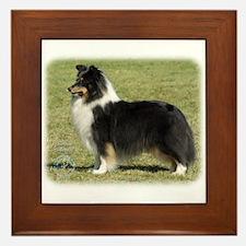 Shetland Sheepdog 9J088D-06 Framed Tile