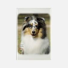 Shetland Sheepdog 9J089D-10 Rectangle Magnet (10 p