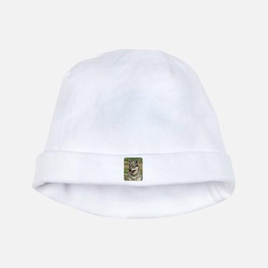 Swedish Vallhund 9J100D-11 baby hat