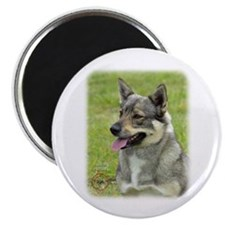 Swedish Vallhund 9P31D-04 Magnet