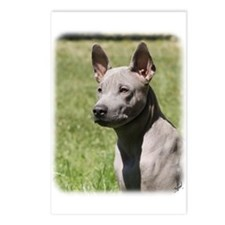 Thai Ridgeback 9Y815D-302 Postcards (Package of 8)