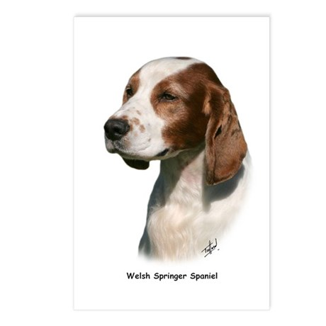 Welsh Springer Spaniel 9Y394D-046 Postcards (Packa