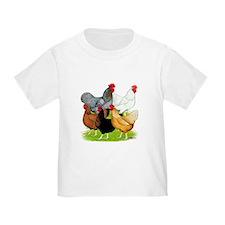 Sex-link Chicken Quintet T