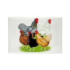 Sex-link Chicken Quintet Rectangle Magnet