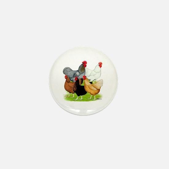 Sex-link Chicken Quintet Mini Button