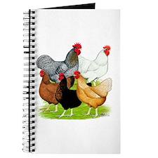 Sex-link Chicken Quintet Journal