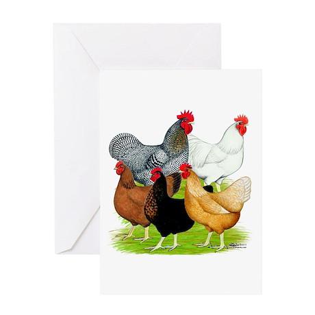 Sex-link Chicken Quintet Greeting Card