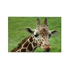 animals/wildlife Rectangle Magnet