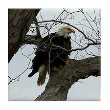 Bald Eagle Right Tile Coaster