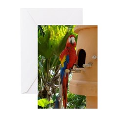 Tropical Colorful Parrot Greeting Cards (Pk of 20)