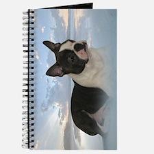 Boston Terrier Pup Journal