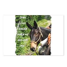 Mule Postcards (Package of 8)