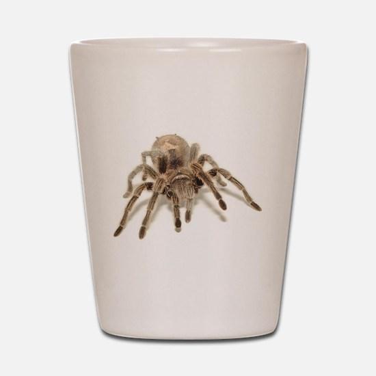 Tarantula Shot Glass