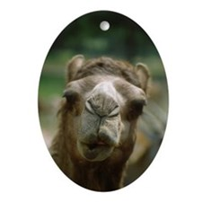 Kissing Camel Oval Ornament